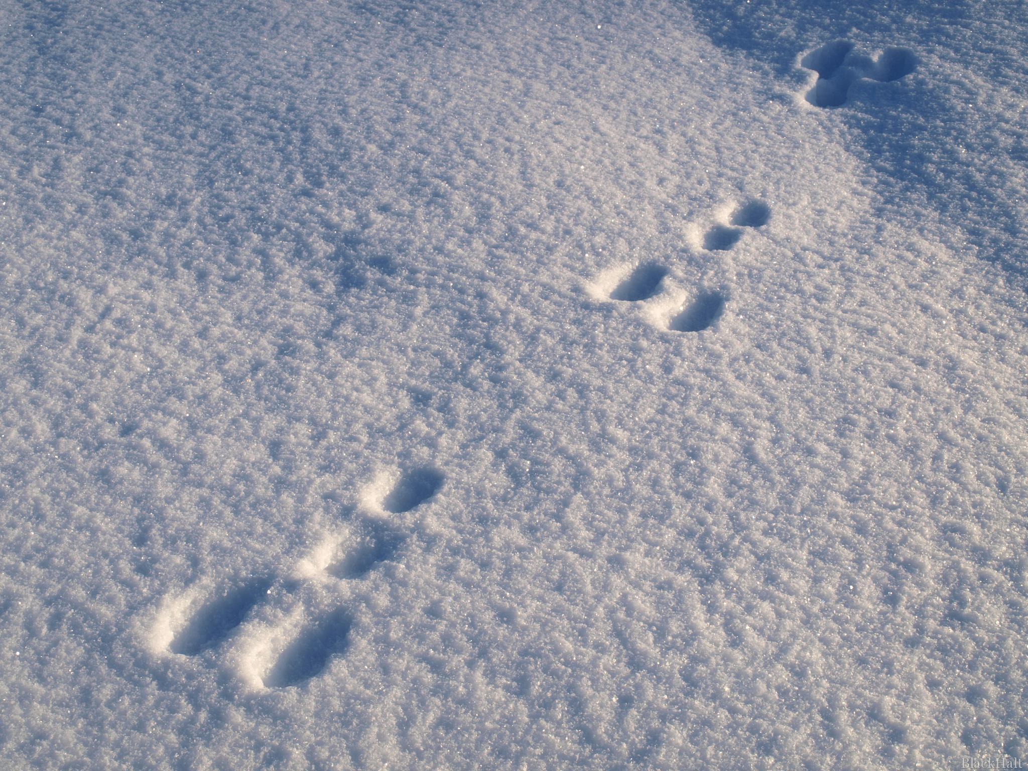Pēdas sniegā