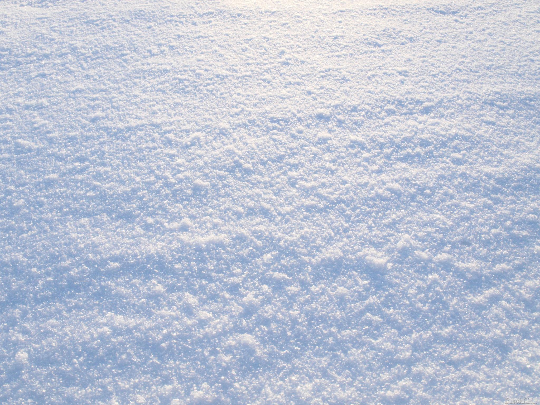 Sniega pūkas