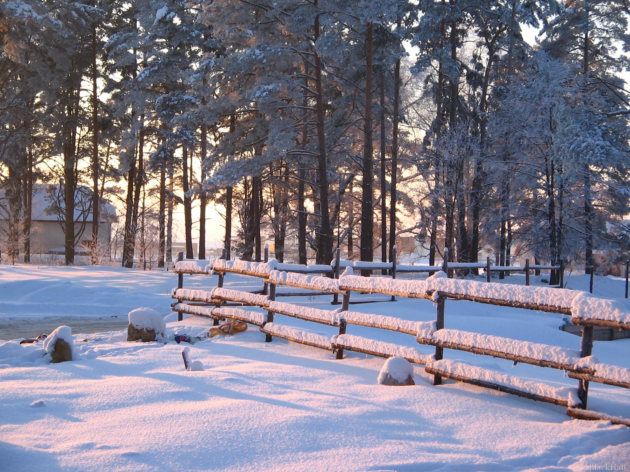 Sniegots skats #4