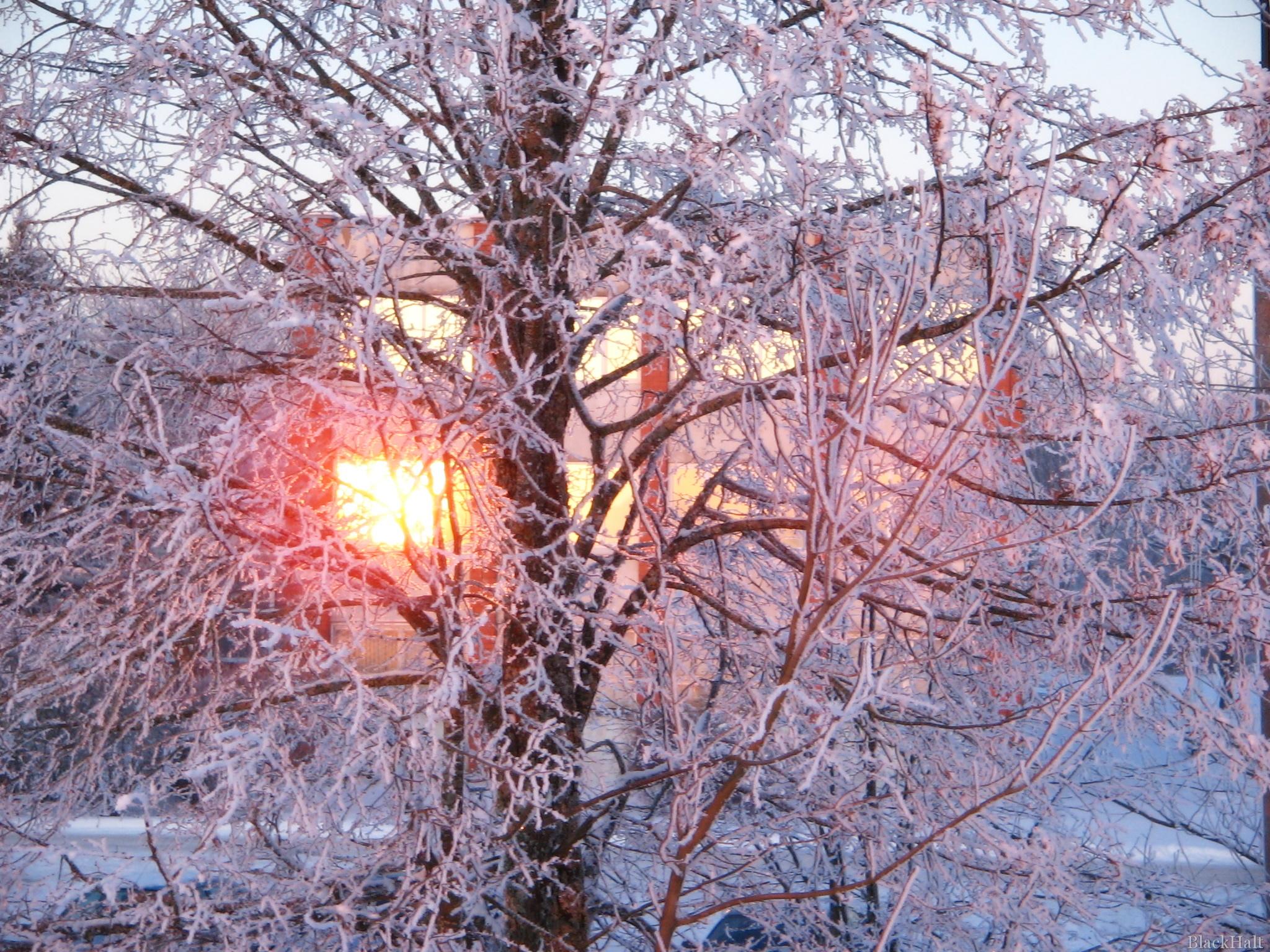 Ziemas saule #2