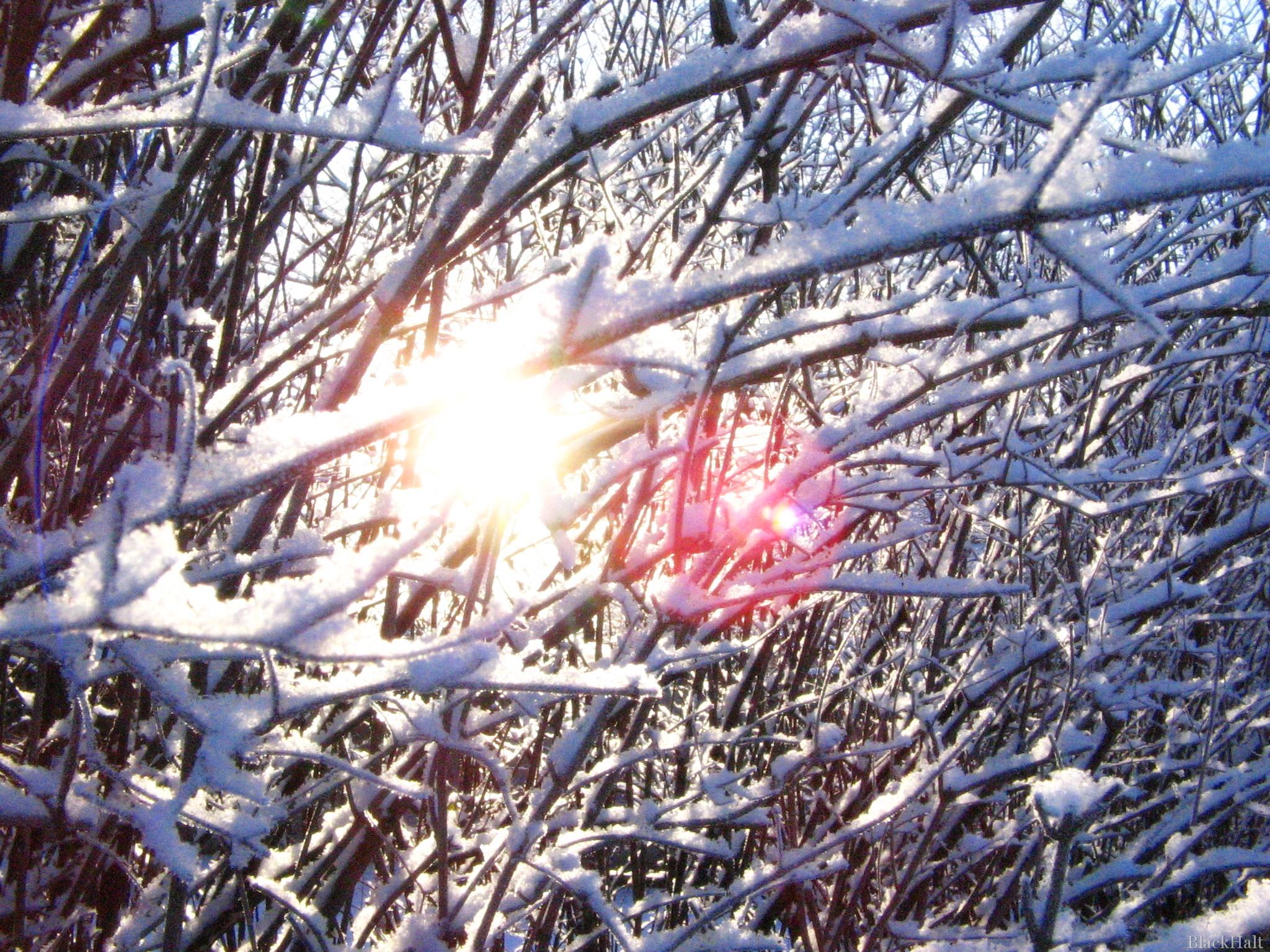 Ziemas saule