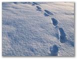 Pēdas sniegā #2