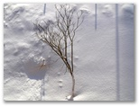 Sniegots